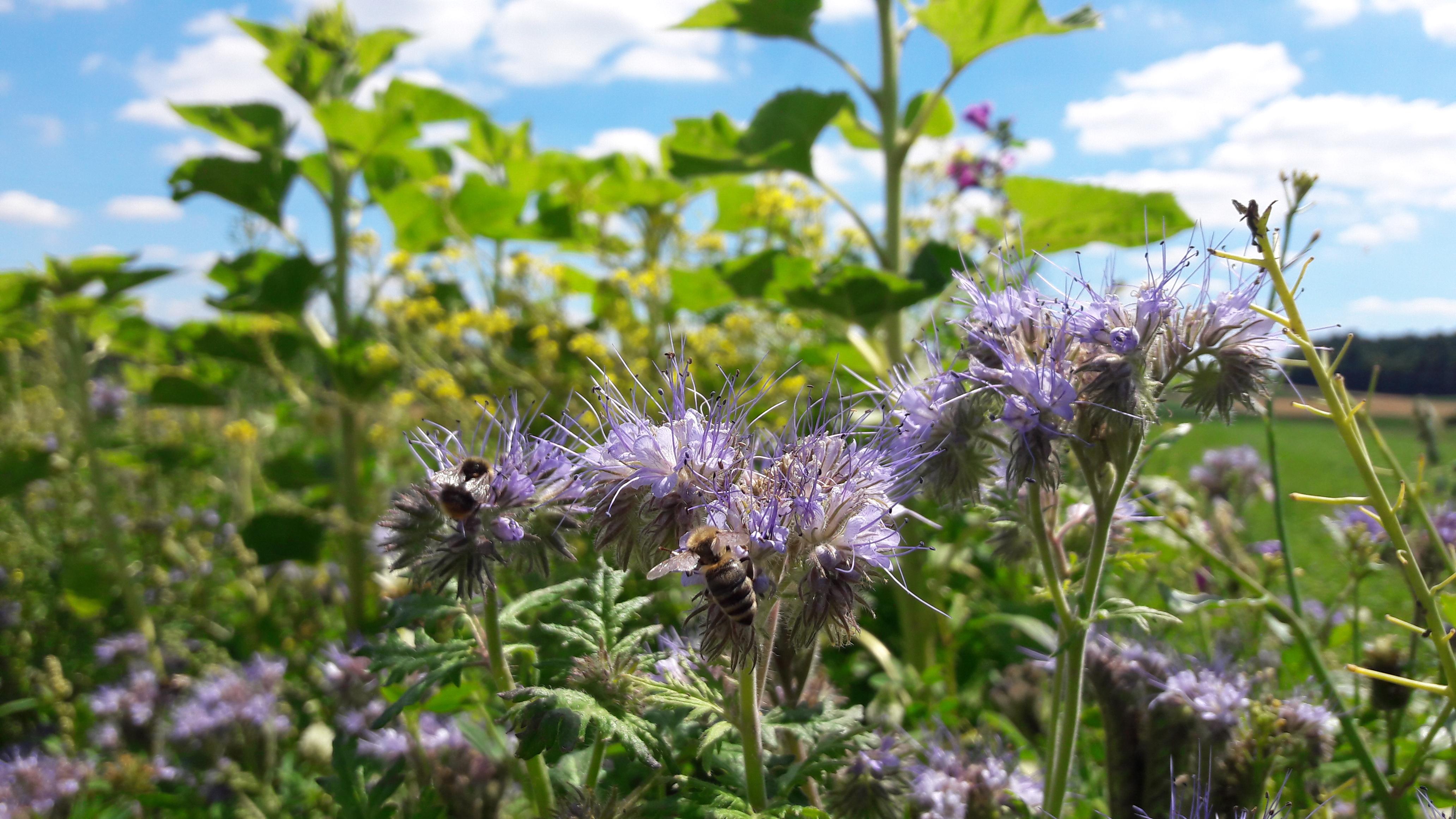 Naturschutzmaßnahmen im Landkreis Sigmaringen gegen Artensterben – 125.237,05 Euro vom Land aus dem Sonderprogramm zur Stärkung der biologischen Vielfalt