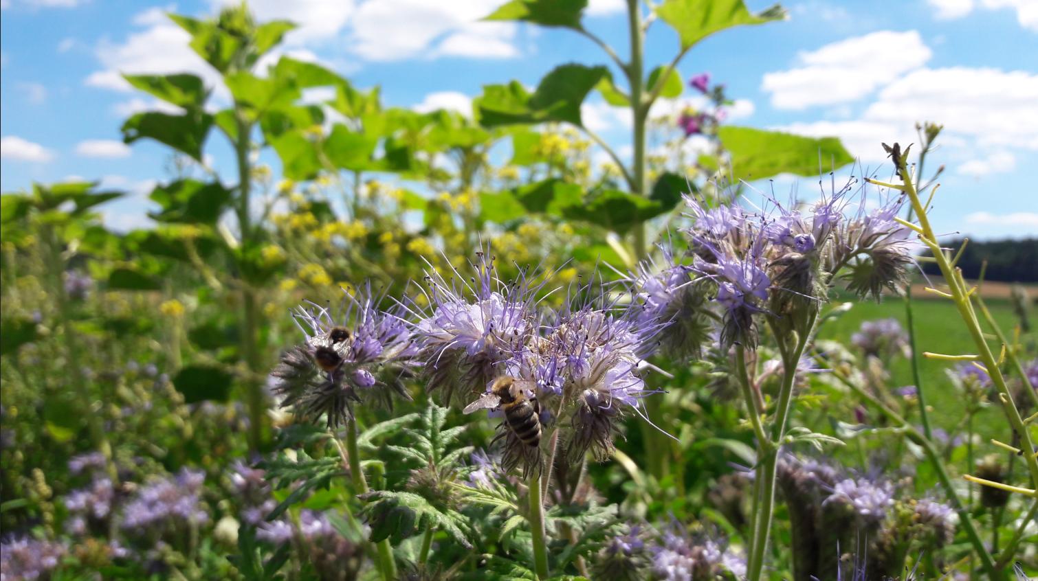 """Gemeinsamer Gesetzentwurf auf Basis des Volksbegehren Artenschutz """"Rettet die Bienen"""""""